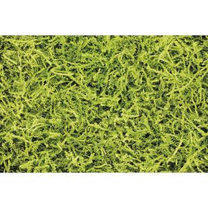 Photo EFK1210 : Frisure papier plissé vert anis 066